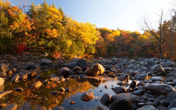 Fond d'écran Pierres, arbres, automne, eau