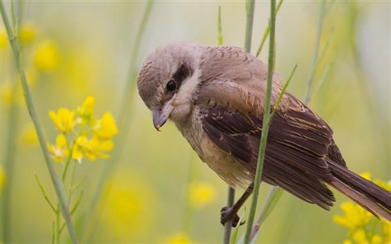 Wallpaper Summer bird, sparrow