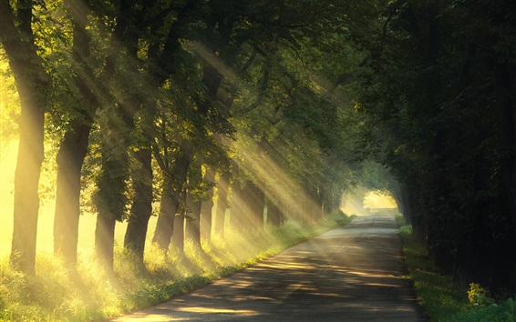Wallpaper Summer, trees, road, sun rays