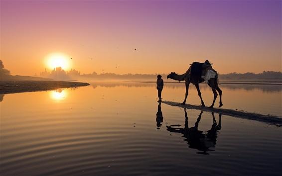 Papéis de Parede Pôr do sol, rio, camelo