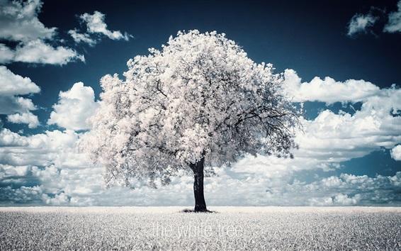 Wallpaper The white tree