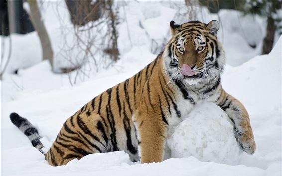 Papéis de Parede Tigre anda na neve grossa