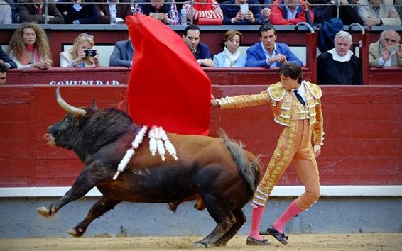 Fond d'écran Toreador, taureau