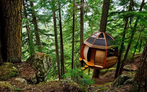 Fondos de pantalla Casa del árbol, bosque