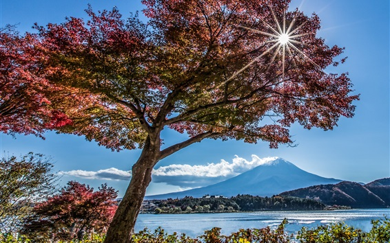 Wallpaper Trees, lake, Fuji mountain, sun rays, Japan