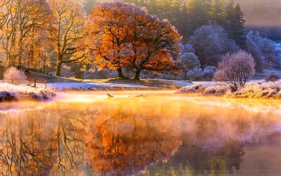 Wallpaper Trees, river, beautiful morning, fog, sunlight