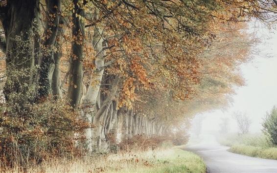 壁紙 木々、道路、霧、秋、朝