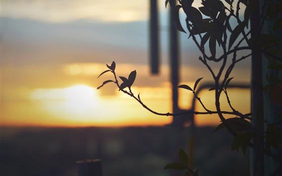 배경 화면 나뭇 가지, 나뭇잎, 백라이트, 황혼