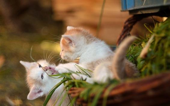 Papéis de Parede Dois gatinhos brincalhão, bokeh