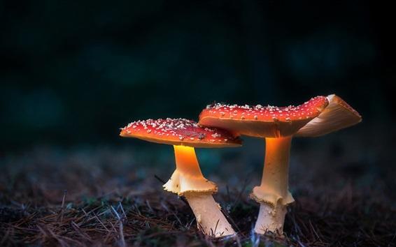 Wallpaper Two red mushrooms