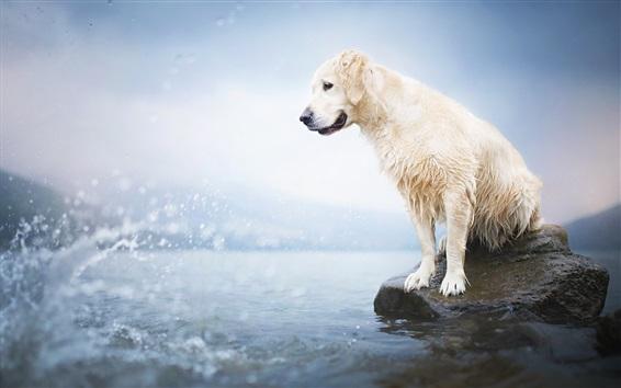 Wallpaper Wet dog, lake