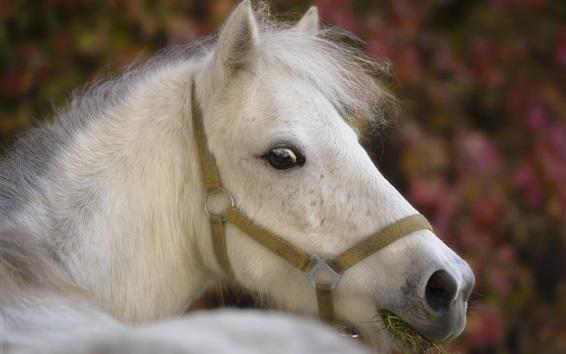 Papéis de Parede Cavalo branco olha para trás