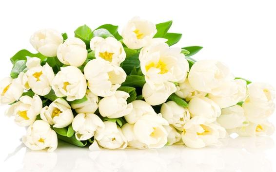Wallpaper White tulip flowers close-up