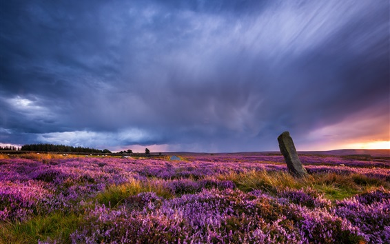 Wallpaper Wildflowers, field, clouds, sunset