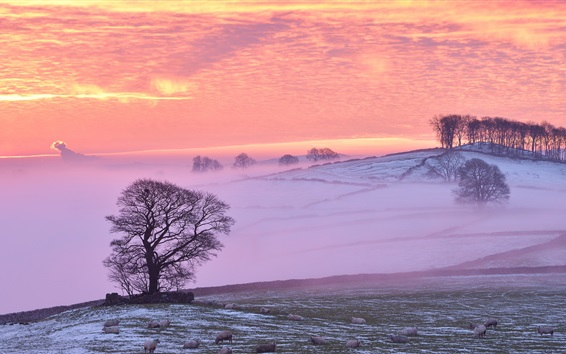 Wallpaper Winter, sheep, clouds, fog, trees, red sky, sunset