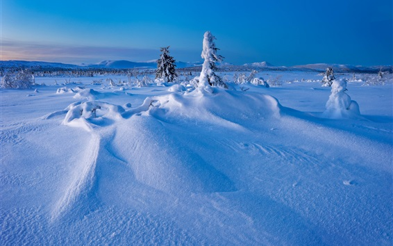 Wallpaper Winter, snow, trees, Sweden, Lapland