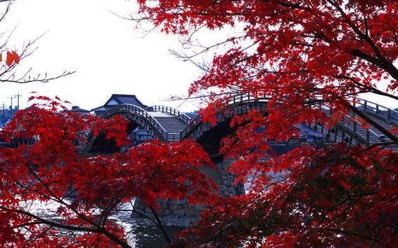 Обои Деревянный арочный мост, река, деревья, красные кленовые листья, Кинтай, Япония