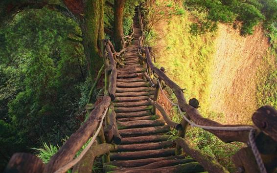 Papéis de Parede Ponte de madeira, desfiladeiro, árvores