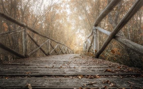 Papéis de Parede Ponte de madeira, árvores, folhas, outono
