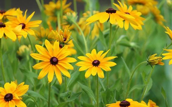 Обои Желтые цветы, лепестки, листья