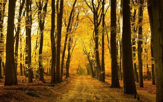 Обои Осень, лес, деревья, путь