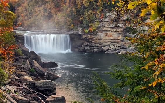 Обои Осень, лес, деревья, водопад, туман, США