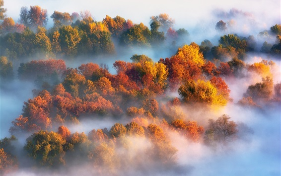 Wallpaper Autumn, trees, fog, morning
