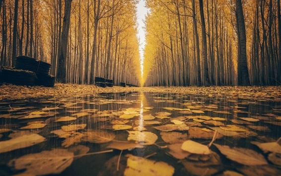 Fond d'écran Automne, arbres, feuilles jaunes, chemin, eau