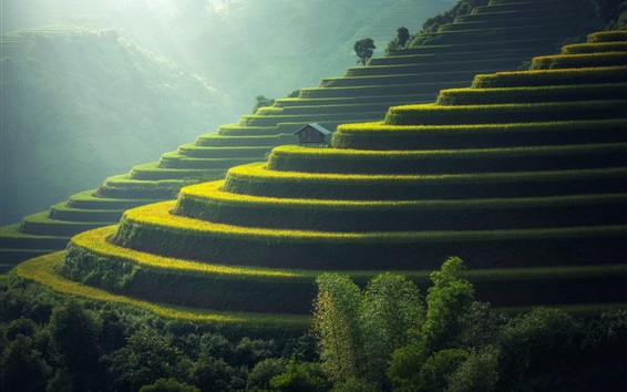 Wallpaper Beautiful rice field, slope, house, countryside