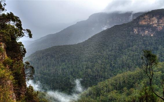 Обои Голубые горы, Австралия, Сидней, лес, деревья, туман