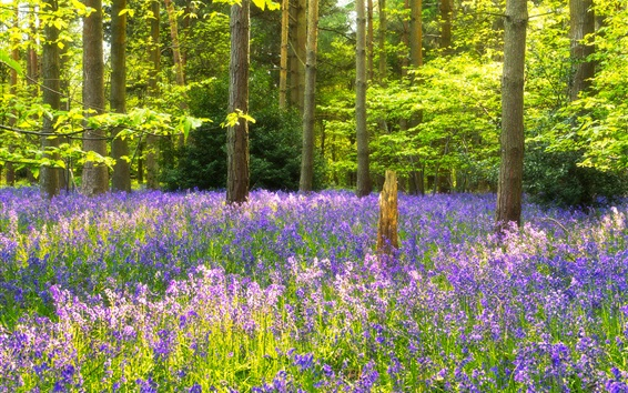 Обои Голубые цветы, лес, деревья