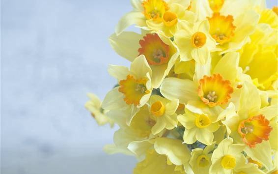 Wallpaper Bouquet, daffodils, yellow flowers