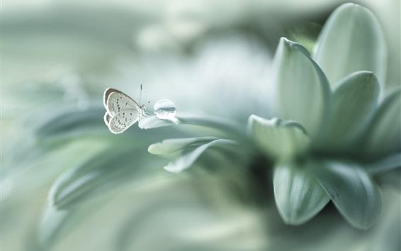 Обои Бабочка, роса, листья, макросъемка