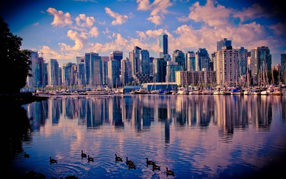 Wallpaper Canada, Vancouver, lake, water, ducks, skyscrapers, city