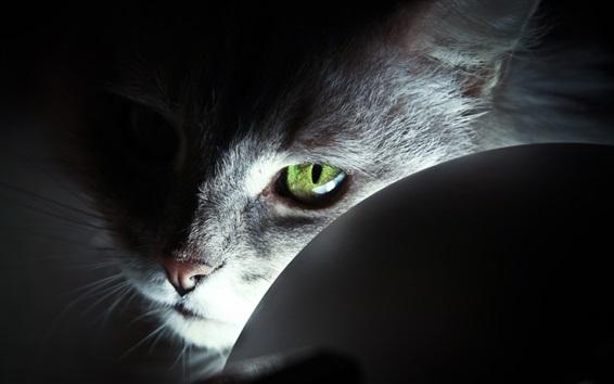 Wallpaper Cat green eyes, light