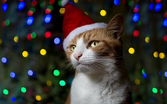 Wallpaper Cat, hat, Christmas, colorful lights
