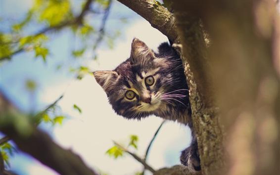 壁紙 木の猫、見る、ボケ