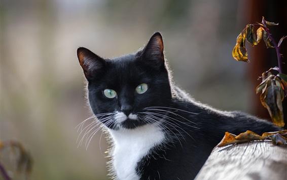 Papéis de Parede Olho de gato, preto e branco