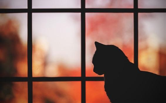 Papéis de Parede Gato, janela, silhueta