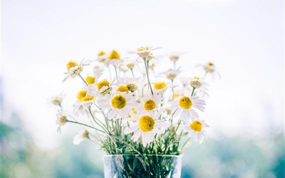 壁紙 カモミール、デイジー、花束、花瓶