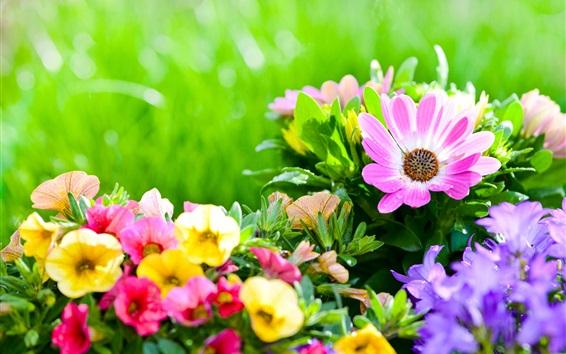 Обои Красочные цветы, клумба, петунии