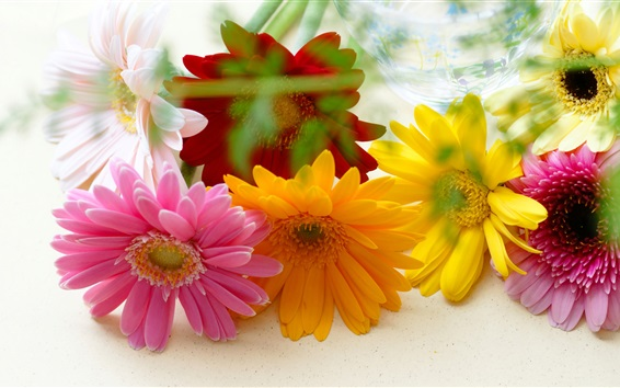 Wallpaper Colorful flowers, gerbera, yellow and pink