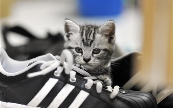 Papéis de Parede Gatinho bonito, sapatos