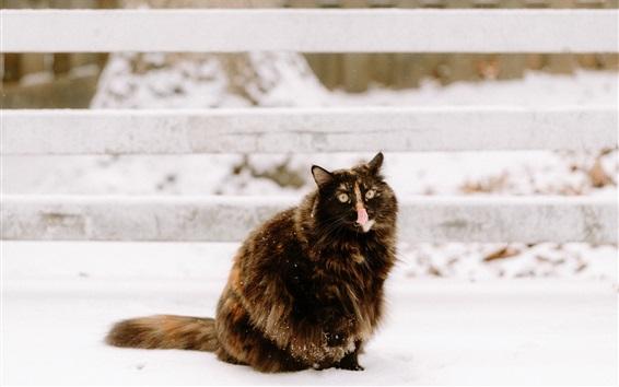 Wallpaper Cute kitten, snow, fence