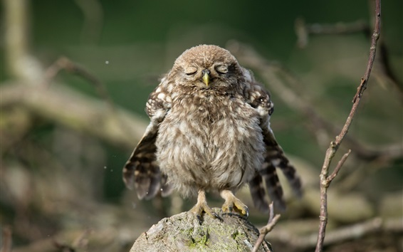 Wallpaper Cute little owl to sleep