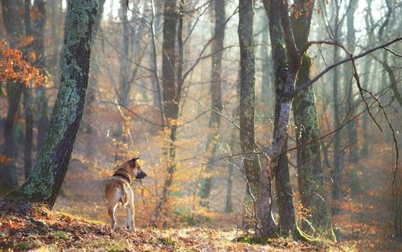壁纸 狗后视图,树