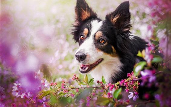 Fondos de pantalla Perro, cara, flores, bokeh