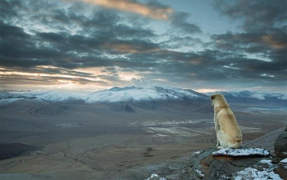 배경 화면 개는 풍경, 산, 구름을 보려고 앉아있다.