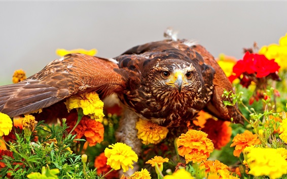 Wallpaper Eagle and flowers
