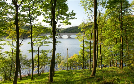 Обои Англия, Дербишир, водохранилище, озеро, деревья, мост